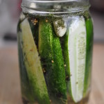lacto-fermented-dill-pickles